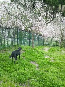 うえき村 DOGRUN-ドッグラン--DSC_0375.jpg