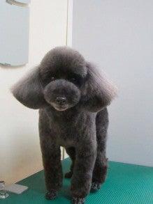 LOOP'S☆十犬十色