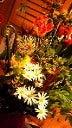 えくぼのパティシエ日記 札幌洋菓子店 手作り菓子fossettefille★フォセットフィーユ★-201204221943000.jpg