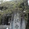 春の三井寺に行ってきましたの画像