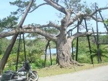 沖縄発 バイカー通信 (南の島の贈り物)
