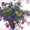 ビジネス講座とお花との画像