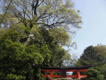 京都の女職人が書く車のブログ☆★-神社