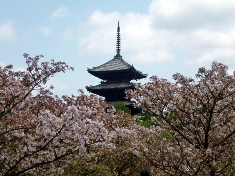 京都の春夏秋冬とプラスα