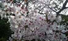 杉田かおる オフィシャルブログ powered by ameba-2012-04-13 08.01.10.jpg2012-04-13 08.01.10.jpg