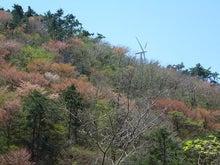 さなごうちらいふ-風車&山桜