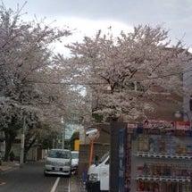 桜咲きましたね♪