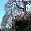 桜2の画像