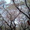 葉桜☆の画像