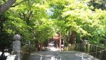 日吉大社公式ブログ「日々よし」-新緑①