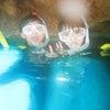 青の洞窟最短のダイビングショップ!テイクダイブTAKE DIVE 青の洞窟ツアーならお任せ!!の画像
