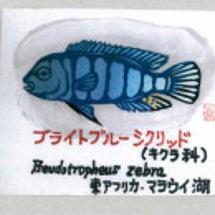 アート魚(ぎょ)ラリ…