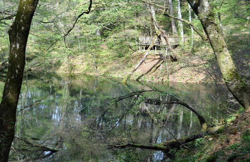 $白神山地ツアーの白神なびスタッフブログ-2012年5月1日の十二湖7