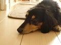 Doggy House(保護犬滞在中)