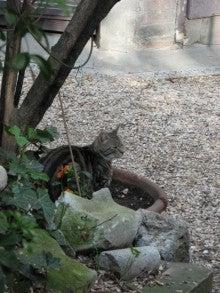 パリの猫たち、猫たちのパリ-ピコ2