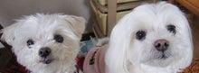ドッグライフカウンセラーメルモパパ-メルクレタイトル
