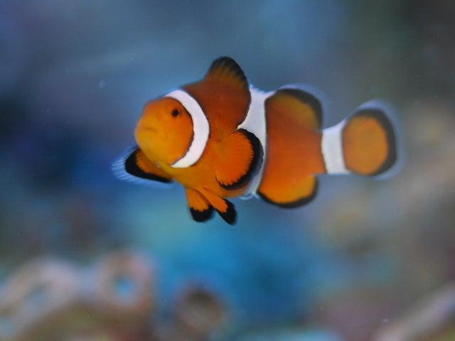 _ 海水魚なう