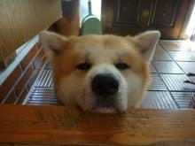 園長のぼやき【一生秋田犬飼い宣言!】