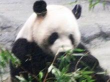 カーズは今日も大忙し-パンダ