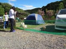 楽園管理人アツシの絵日記-犬連れで、いっしょに宿泊、同伴キャンプ03