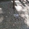 鹿島の要石の画像