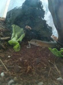 $部屋とカナヘビと私