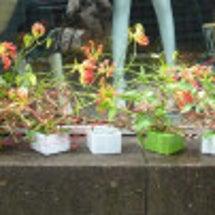 渋谷のflower …