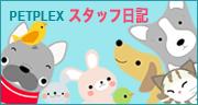 PETPLEXスタッフ日記