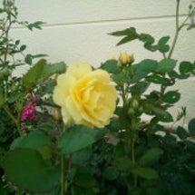 バラの花から私に!