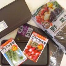 100円菜園で種まき…