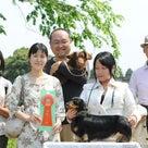 東京南桜愛犬クラブ展行ってきました。の記事より