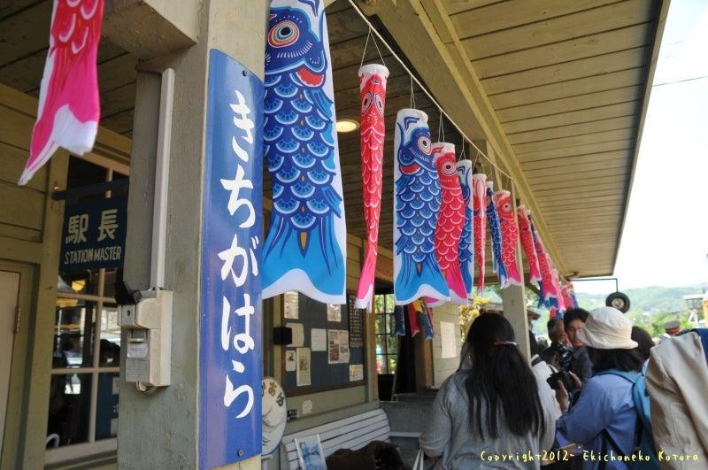 駅長猫コトラの独り言~旧 片上鉄道 吉ヶ原駅勤務~-駅には鯉のぼりが