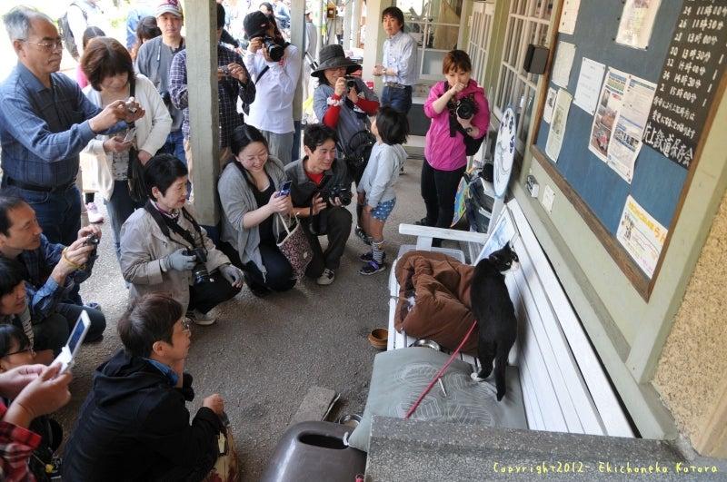 駅長猫コトラの独り言~旧 片上鉄道 吉ヶ原駅勤務~-たくさんのお客さんに囲まれて