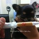 子犬ちゃんワクチンの記事より