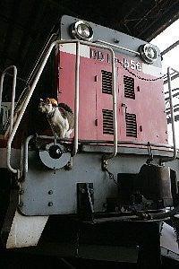 駅長猫コトラの独り言~旧 片上鉄道 吉ヶ原駅勤務~-力持ちやでの駅長猫