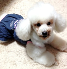 $LOVE'S DOG staff blog