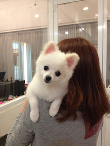 ASAMI's DOG LIFE-IMG_2976.jpg