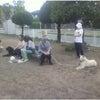 高崎市 前橋市 犬のしつけ 合同訓練(高崎駅周辺)の画像