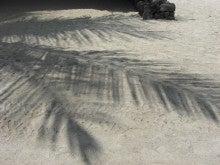 """「 """"自分軸""""をつくろう ♪ 」-palm tree shadow"""
