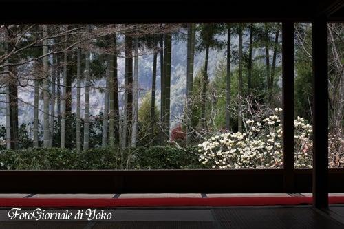 YOKO'S PHOTO DIARY-Kyoto005