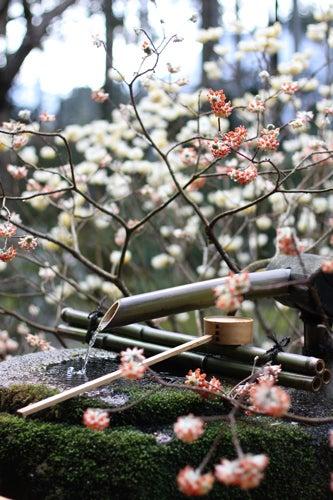 YOKO'S PHOTO DIARY-Kyoto003