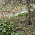 近所の小河川もようやく春の記事より