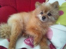 かなつ久美オフィシャルブログ「美容漫画家だけど犬バカです。」Powered by Ameba