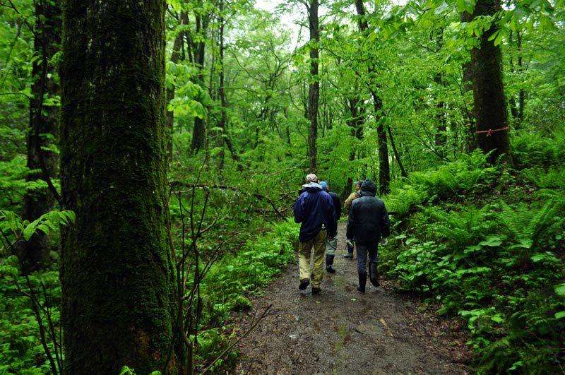 $白神山地ツアーの白神なびスタッフブログ-2012年5月中旬の白神山地「雨の十二湖」5