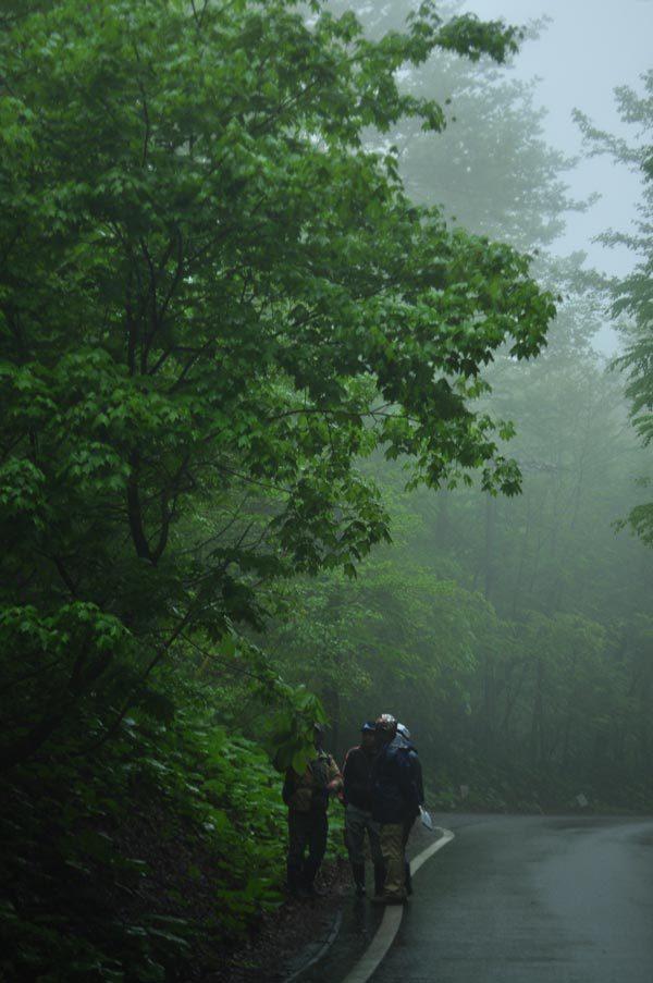 $白神山地ツアーの白神なびスタッフブログ-2012年5月中旬の白神山地「雨の十二湖」10
