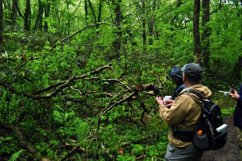 $白神山地ツアーの白神なびスタッフブログ-2012年5月中旬の白神山地「雨の十二湖」6