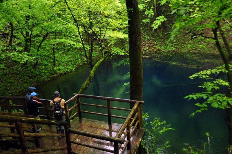 $白神山地ツアーの白神なびスタッフブログ-2012年5月中旬の白神山地「雨の十二湖」2