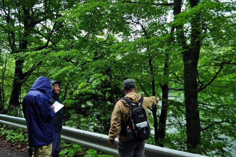 $白神山地ツアーの白神なびスタッフブログ-2012年5月中旬の白神山地「雨の十二湖」1