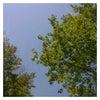 今日は朝から最高のお天気です!の画像