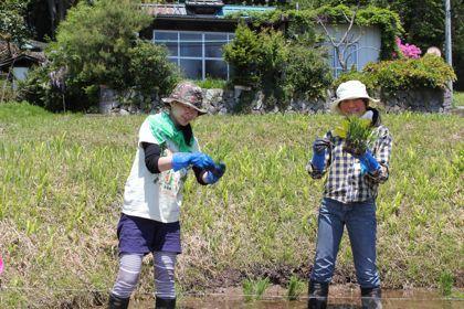【群馬県昭和村】 農園星ノ環ブログ *ほしのわ にっき*